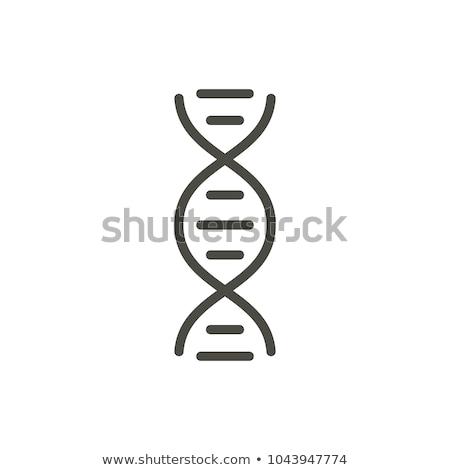 dna · spiraal · vector · icon · pictogram · illustratie - stockfoto © kyryloff