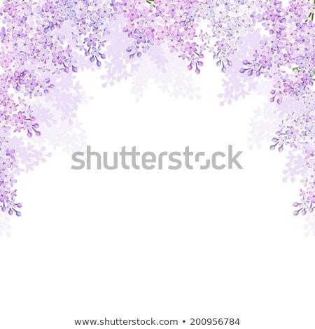 çalı çerçeve örnek doğa yaprak Stok fotoğraf © bluering