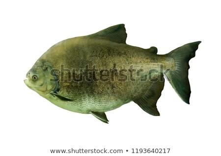 onderwater · wereld · groep · mensen · kijken · vis · schoonheid - stockfoto © jossdiim