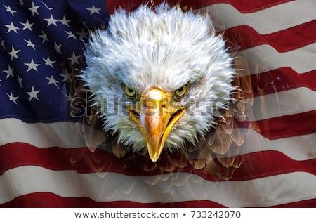 Portret dumny amerykański łysy orzeł Zdjęcia stock © lightpoet
