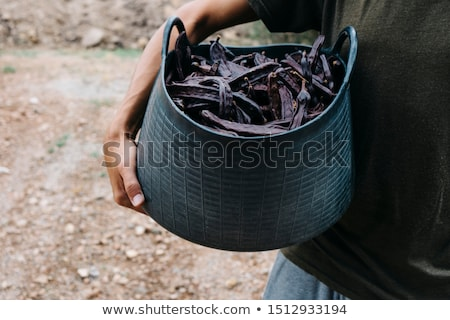 farmer carrying a basket full of carob beans Stock photo © nito