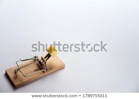 階 待って 齧歯類 木材 マウス セキュリティ ストックフォト © nomadsoul1