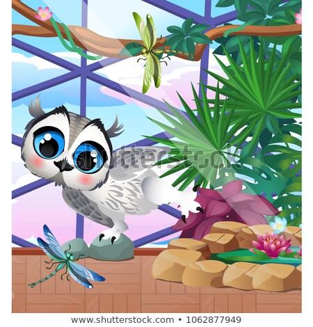 Aranyos bagoly üvegház egzotikus növények rajz Stock fotó © Lady-Luck
