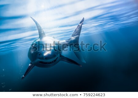 Pêcheur requin couteau illustration loisirs Photo stock © Stocksnapper
