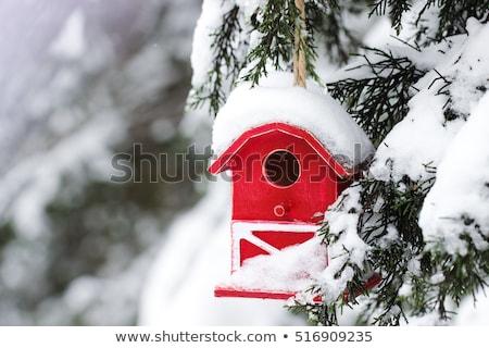 Gniazdo polu zimą zestaw w górę mały Zdjęcia stock © brianguest