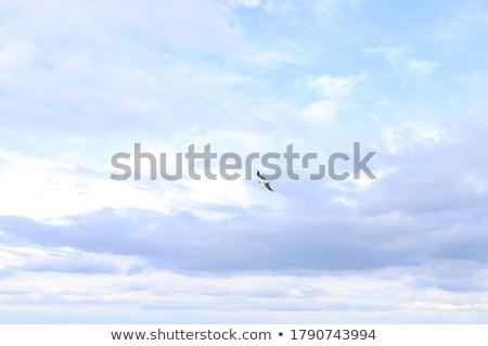 Meeuwen oranje hemel groep kleurrijk water Stockfoto © IvicaNS