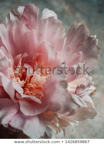 çiçek kumaş siyah bitki pembe poster Stok fotoğraf © Galyna