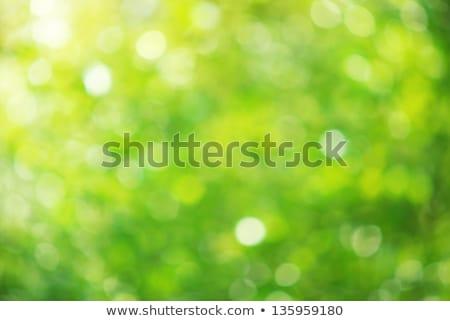 Sun beams and green leaves Stock photo © yoshiyayo