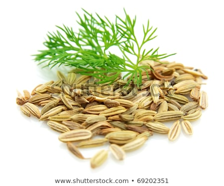 Seeds and a fennel branch Stock photo © Masha