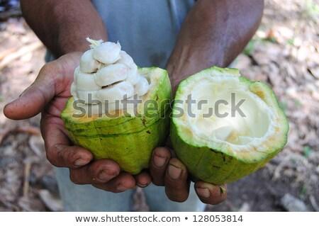 Main fruits fond ferme Photo stock © MojoJojoFoto