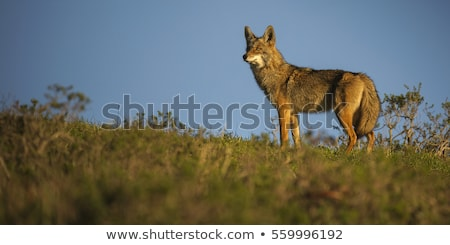 Point Reyes National Seashore wildlife. Stock photo © snyfer