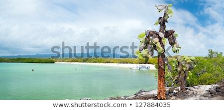 guarda-sol · praia · azul · mar · céu - foto stock © pxhidalgo