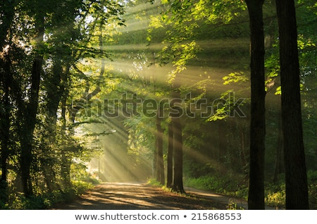 trees with sunlight stock photo © Tomjac1980