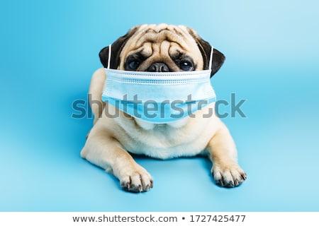 ветеринар · собака · хирургии · улыбка · портрет · женщины - Сток-фото © simazoran