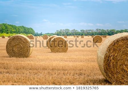 bale of straw on fields with blue sky Stock photo © meinzahn