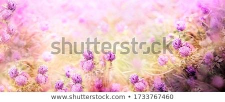 красивой · луговой · розовый · Полевые · цветы · небе · природы - Сток-фото © meinzahn