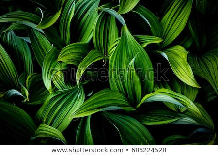 Zielone roślin liści tekstury charakter Zdjęcia stock © stevanovicigor