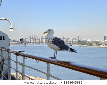 Gaviota pie rail ojos naturaleza aves Foto stock © alex_grichenko