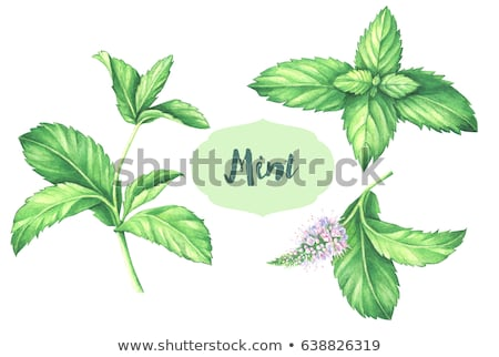 Green and White Mints Stock photo © JFJacobsz
