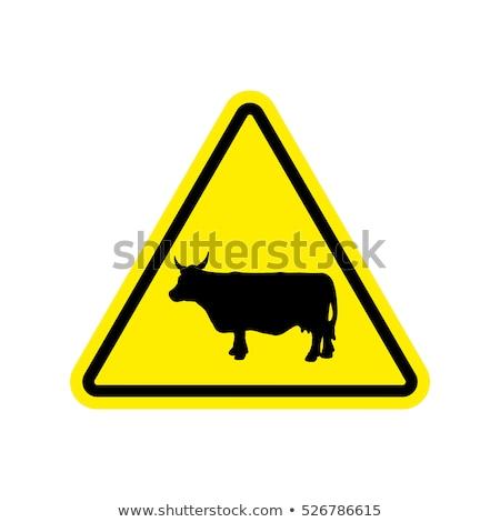 Attentif vaches blanc noir domaine printemps visage Photo stock © tilo