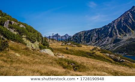 Belo montanhas grama montanha verão rocha Foto stock © pixelman