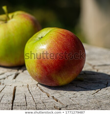Farm fresh red and green apples Stock photo © ozgur