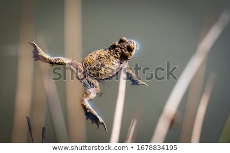 részlet · kettő · víz · természet · portré · tó - stock fotó © ivonnewierink