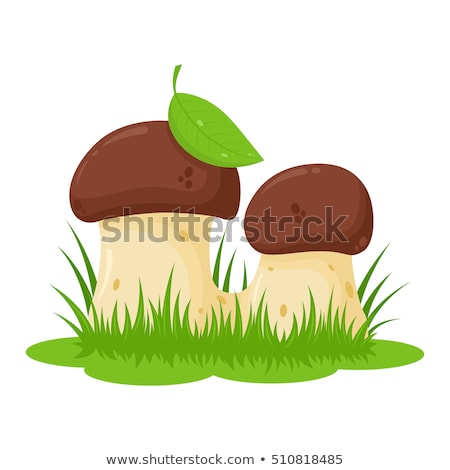 Stock photo: growing two white mushrooms
