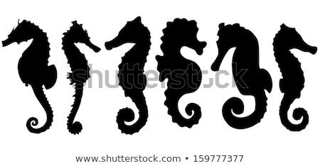Silhouet illustratie geïsoleerd witte water paard Stockfoto © cidepix