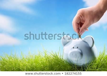 Grass Piggy Bank Stock photo © make