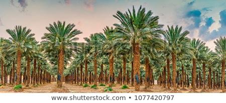 Verscheidene palmbomen heldere hemel zon natuur Stockfoto © bezikus