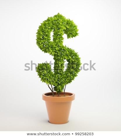 dinheiro · planta · isolado · branco · negócio · árvore - foto stock © unikpix