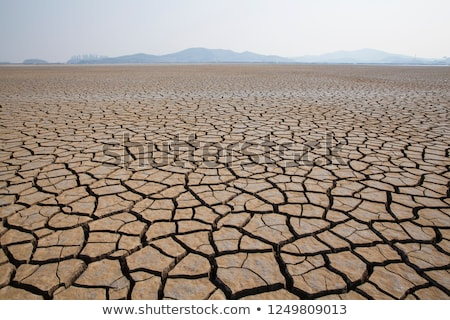 A dry land background Stock photo © bluering