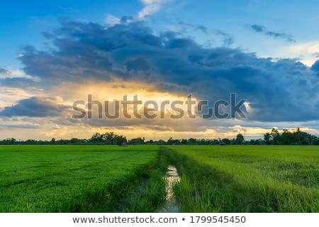 zöld · búzamező · kék · felhős · égbolt · nyár - stock fotó © karandaev