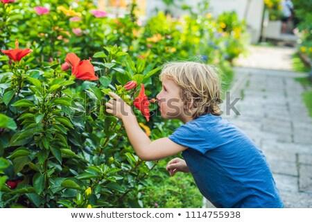 Junge blau tshirt groß rot Hibiskus Stock foto © galitskaya