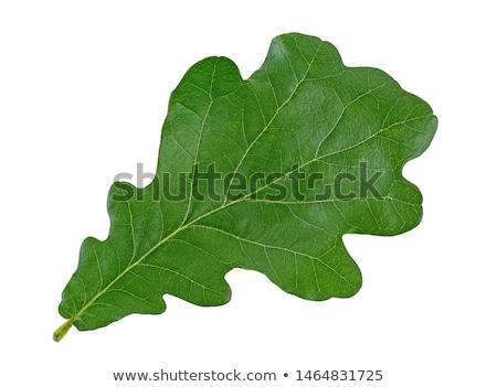 Minta zöld tölgy levelek vízfesték végtelen minta Stock fotó © Artspace