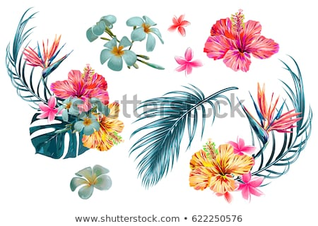 Vektor nyári szabadság illusztráció virág trópusi pálmalevelek Stock fotó © articular