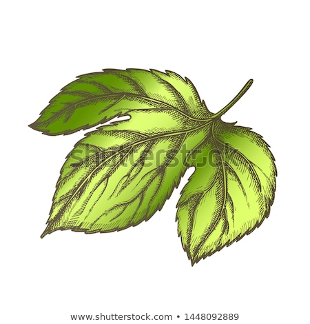 Hop blad vector rand tegenover monochroom Stockfoto © pikepicture