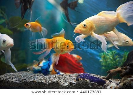 aquarium colourfull fishes in dark deep blue water Stock photo © galitskaya