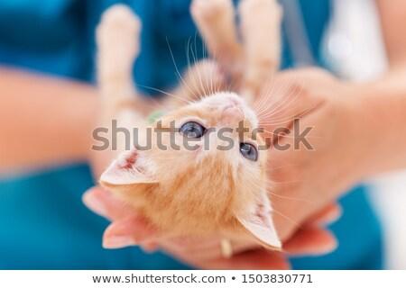 Cute zenzero gattino indietro giocare donna Foto d'archivio © ilona75