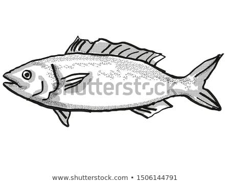 Kahawai New Zealand Fish Cartoon Retro Drawing Stock photo © patrimonio