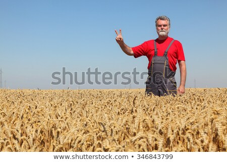Farmer Inspecting Wheat Crop Stock photo © HighwayStarz