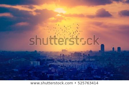 Cairo dorado silueta simple turismo Foto stock © ShustrikS