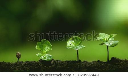 Yeşil eğreltiotu yaprakları biçim koni orman Stok fotoğraf © papa1266