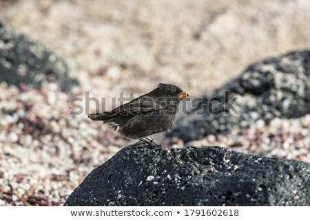 Wenig Boden Inseln zentrale Tiere Buch Stock foto © Maridav