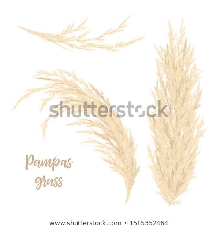 Feathery falls Stock photo © bobkeenan