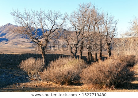 Autumn mountains  and stark bare trees  Stock photo © wildman