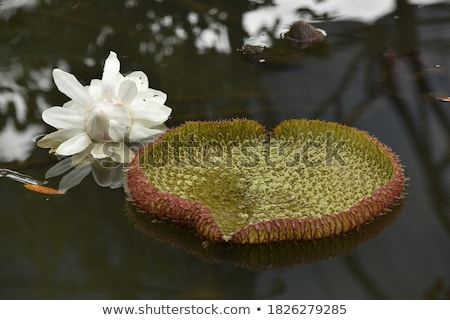 Beautiful bright heart of red color with green leaves floating a Stock photo © HASLOO