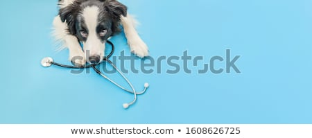kutya · törött · láb · citromsárga · labrador · retriever · alszik · orvosi - stock fotó © simazoran