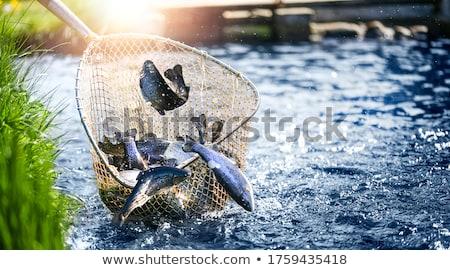 魚 · 虹 · トラウト · 浅い · 水 - ストックフォト © stevemc